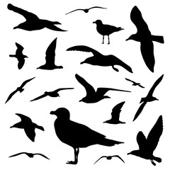 Seagull silhouette set isolated on white background vector