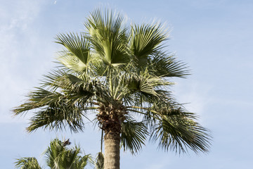 Palm tree with sky background