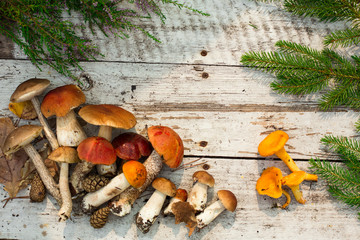 Mushrooms on wooden background. Card on autumn or summertime. Forest harvest. Boletus, aspen, chanterelles, leaves, buds, berries. Top view