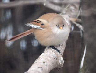 Small cute bird at the branch
