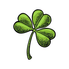 Clover. Vintage color vector engraving illustration