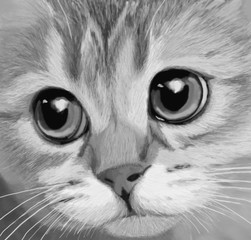 handrawn cat sketch