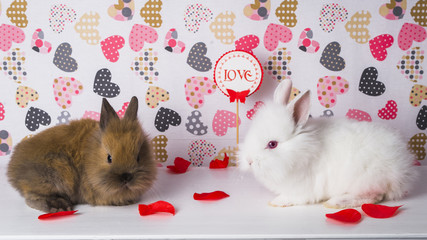 Two rabbits on the background of hearts