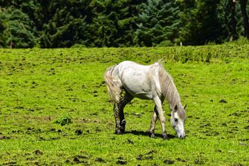 Irland - Pferde in den Wicklow Mountains