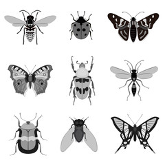Monochrome butterfly and bug collection