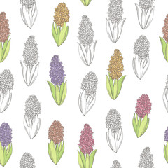 Hyacinth flower color graphic seamless pattern sketch illustration vector