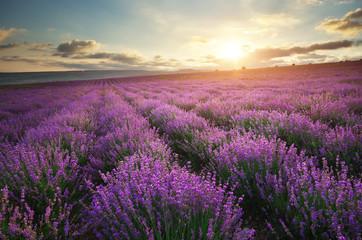 Foto op Canvas Zonsondergang Lavender beautiful meadow.