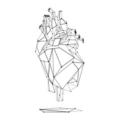 Low poly style isolated line anatomical heart in black color on