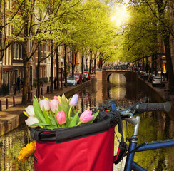 Famous Amsterdam with basket of colorful tulips against canal in Holland