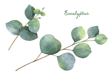 Watercolor hand painted set with eucalyptus leaves and branches.