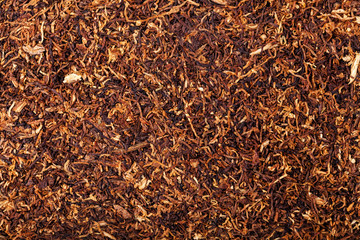 dried smoking tobacco