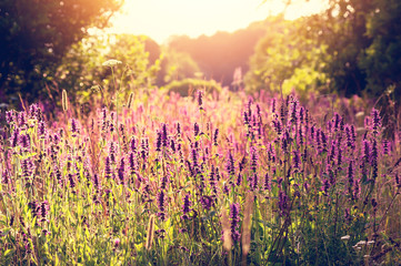 Summer colorful  landscape with wildflowers at sunset.