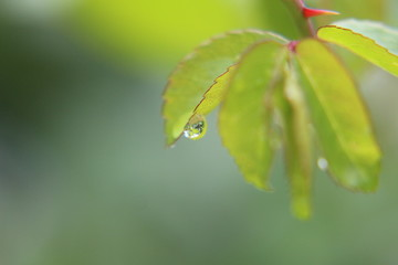 background droplets leaves wallpapers plants