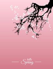 Hello spring nature greeting card. Beautiful Japanese cherry tree (sakura) abstract background. Vector illustration