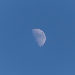 moon in the daytime sky