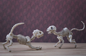 Skeleton dog and skeleton cat