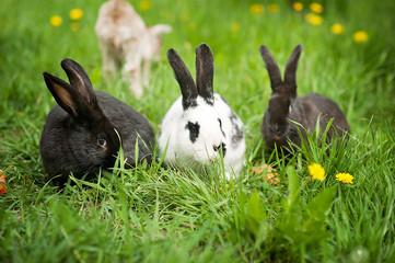 three rabbits in green grass on the farm
