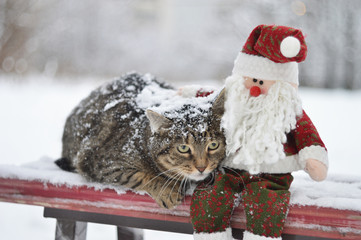 Striped winter homeless cat sitting on a bench next to a toy Santa Claus. Rescue stray animals. New Year hope.