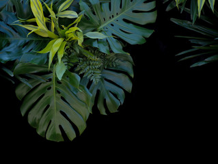 Tropical forest plants green leaves on black background, fern, m