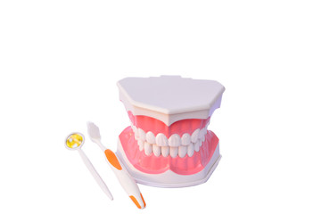 dental care model and tooth brush on white background isolate