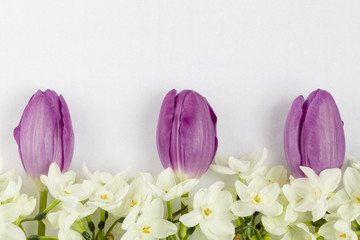 Three purple tulips and white narcissus at the bottom in line on white textured background