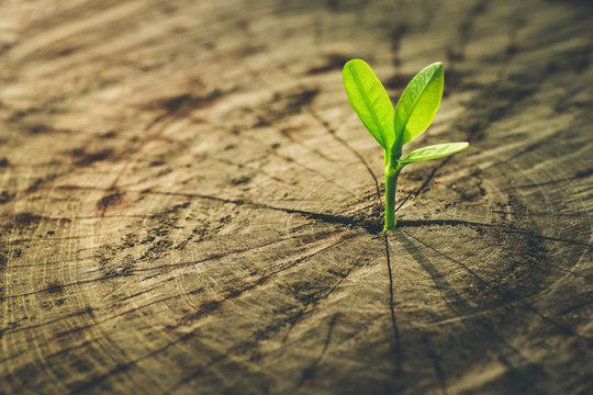 New Life concept with seedling growing sprout (tree).business de