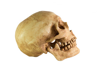 Skull side  view on white background / Image Isolate on white background with clipping path