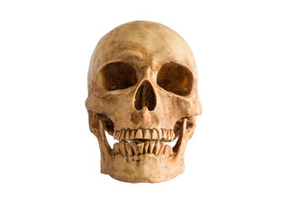 Skull front view on white background / Image Isolate on white background with clipping path