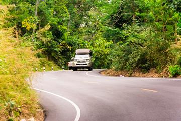Taxi im Dschungel