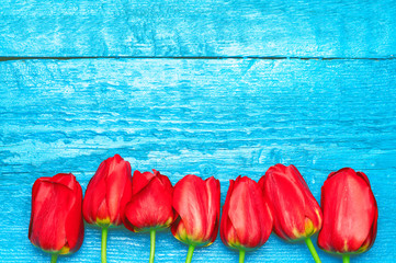 Tulips. Easter. Red tulips on a background of blue boards. Spring flowers. Easter 2016. Springtime. Toned image