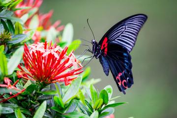 Schmetterling in Blüten
