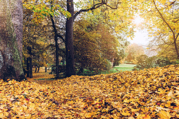 Fallen autumn leaves in the park with vintage look