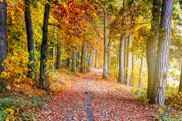 Pathway through the autumn forest with sunbeams