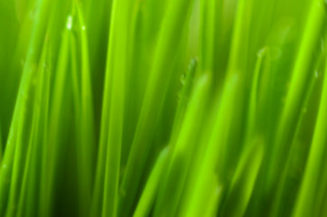 Blur Green Abstract Background