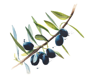 Olive branch watercolor illustration isolated on white background
