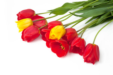 Beautiful Red and yellow Tulips Flowers on white background