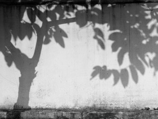 tree shadow on the old white wall street