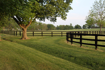 Tree-lined Fenced Sprawling Pasture Wall mural