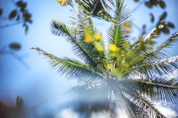 Tropical nature backround, palm tree against blue sky with sun g