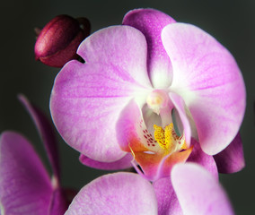 Macro image of orchid, captured with a small depth of field. Floristic colourful background