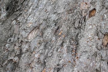 old rustic wood skin