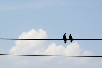 two birds on electricity wire