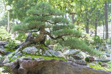Bonsai and Penjing with beautiful miniature