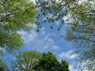 Different tops of green trees against blue sky background