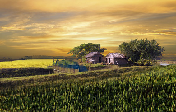 Beautiful huts in the village of bangladesh during sunset