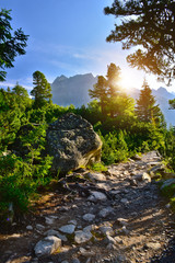 Wall Mural - Stone path in the forest. Tatra mountain sunrise