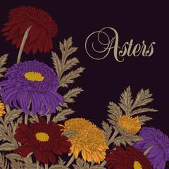 Астры. Цветы. Векторная иллюстрация в стиле винтаж. Ботаника. Классическая открытка.