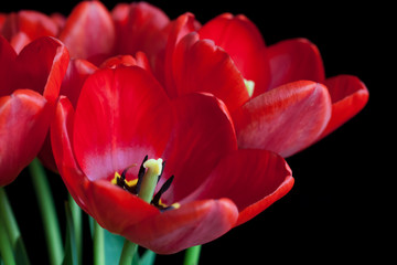 Bouquet of luxurious spring flowers, Red tulips wallpaper