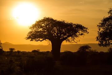 Aluminium Prints Baobab in sunset