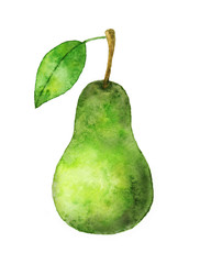 Watercolor sketch with pear.  Hand drawn illustration.